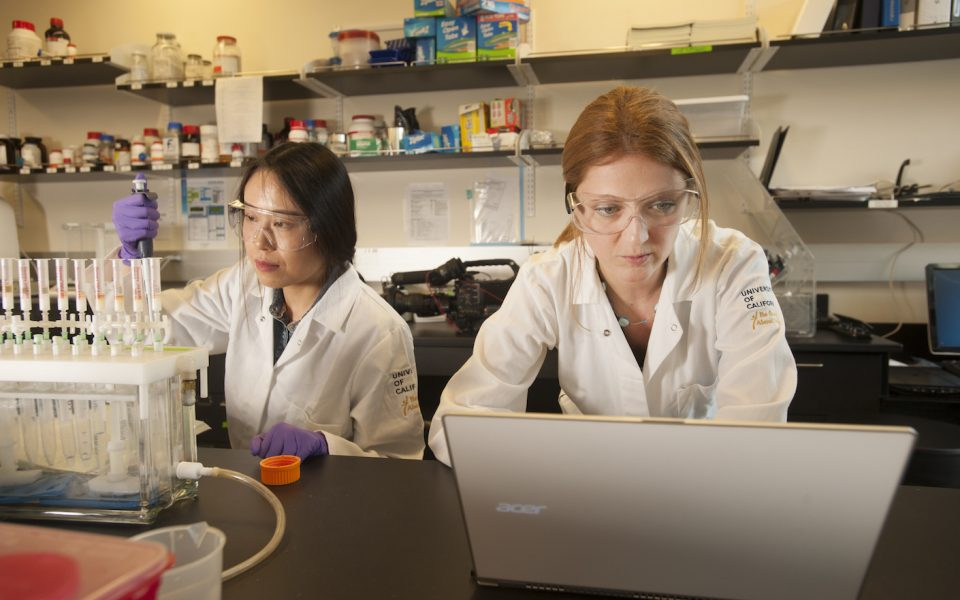 Professor Daniela Barile works on her laptop computer as Tian Tian, a foot science major, work at Daniela Barile Food Science Laboratory on Friday February 12, 2016 at UC Davis.  The Barile Lab are doing work on understanding the chemical and biological properties of bovine milk and how they can better help people. (G. Urquiaga/UC Davis)