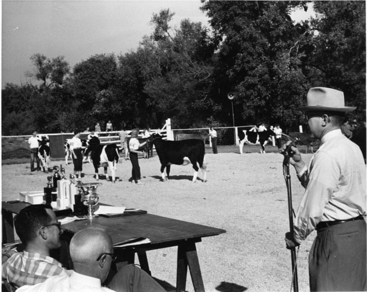 Little International Livestock Show, Robert Laben at Cattle Judging, circa 1950-1959.