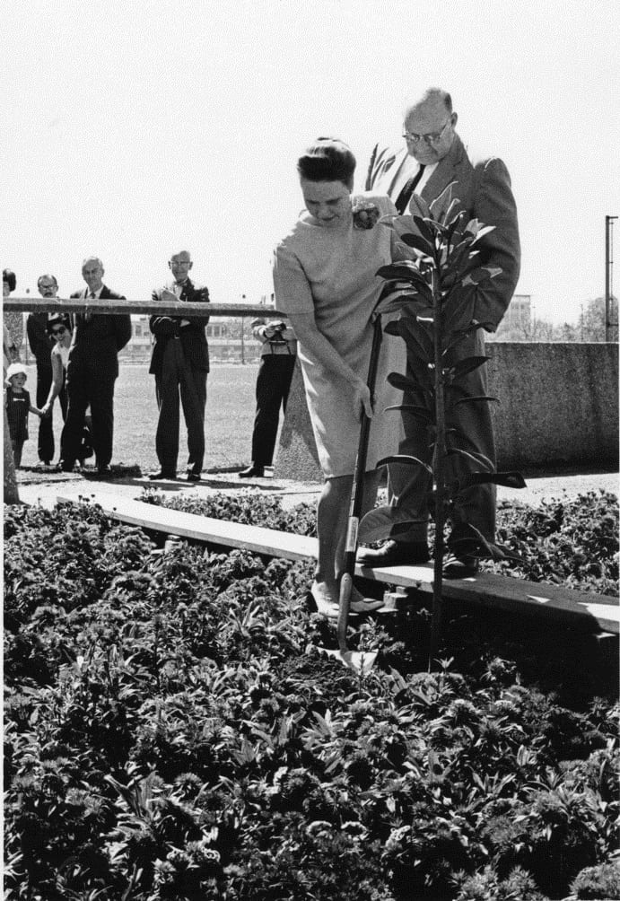 Planting the centennial tree, March 28, 1968