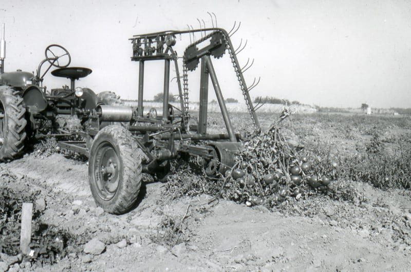 Original field trial of separation unit used in tomato harvester, 1952.