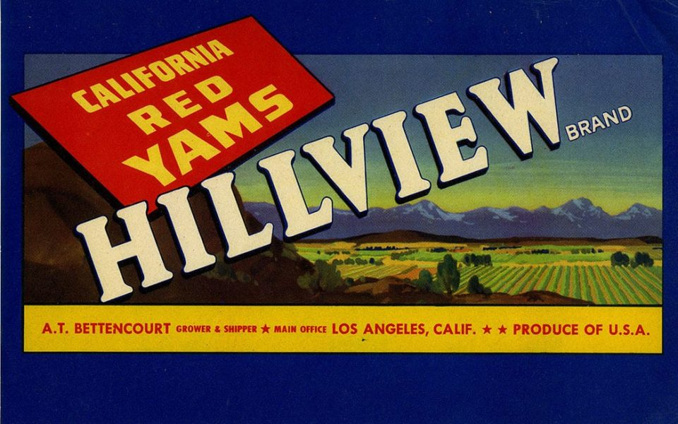 Lithograph container label for Hillview California Red Yams,  A.T.Bettencourt of Turlock, CA Courtesy of Special Collections, UC Davis Library. Lug Label Collection 1890-1940 , Coll no. D-211, 32:88