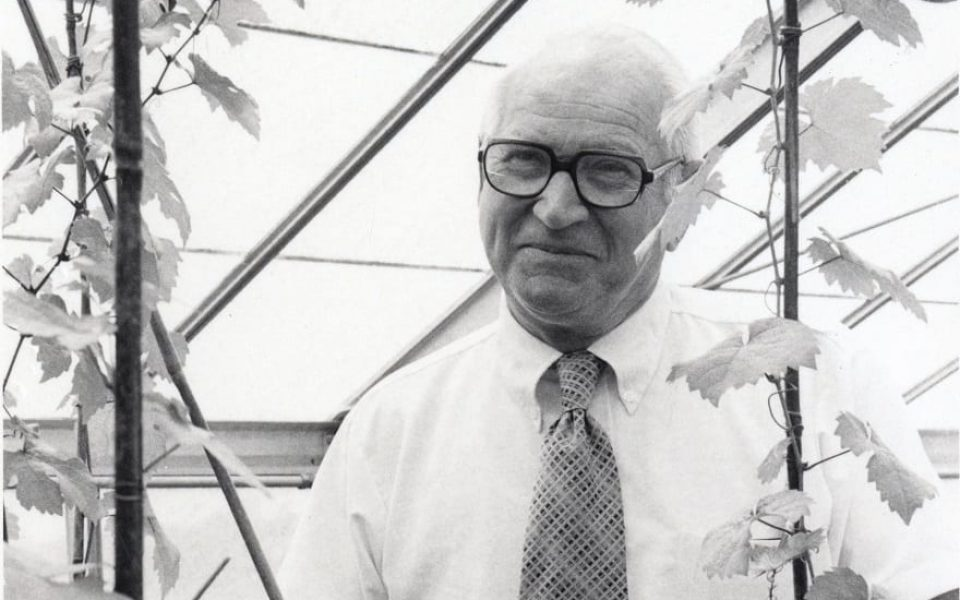Professor Emeritus of Viticulture Harold Olmo played an integral role in establishing UC Davis' international reputation in wine. (Academic Technology Services Photographs Collection, Archives and Special Collections)
